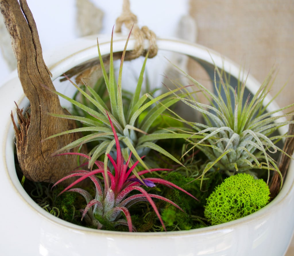 Brighten and green-ify your home with a cute and colorful air plant hanging  garden