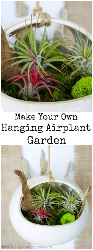 Brighten and green-ify your home with a cute and colorful air plant hanging garden! This is a super easy and quick DIY project that takes 5 minutes to put together and looks like a work of art. Air plants are very low maintenance too- just thoroughly immerse them in water about 2x/week and then let them dry, and make sure they get some indirect light. They do not need any soil, just rest them on top of the moss. If you want to make them truly thrive there are special fertilizers you can purchase online.