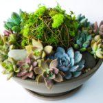 DIY VIBRANT Succulent Planter