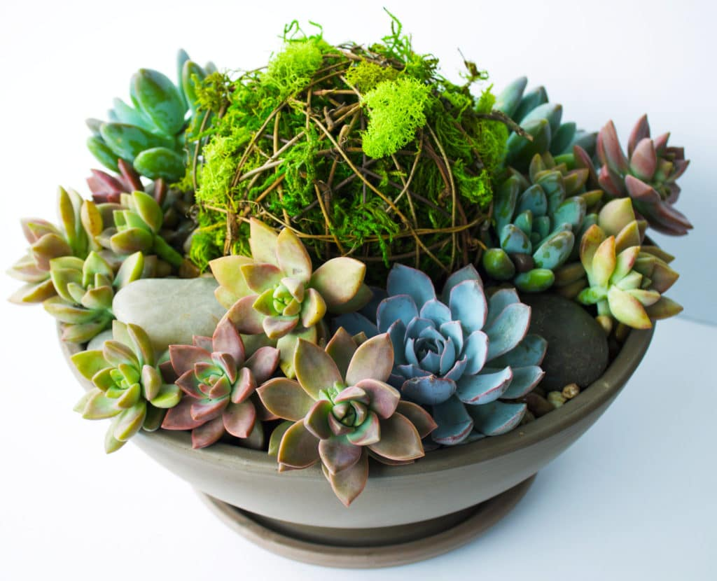 diy vibrant succulent planter kelley and cricket