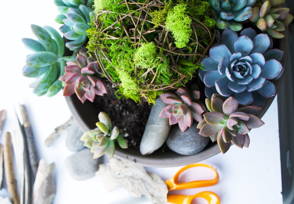 Make you own Succulent Planter with a few simple items. This DIY tutorial will show you how to arrange the items to create a professional looking and breathtaking centerpiece! Best of all succulents are very low maintenance an look awesome!