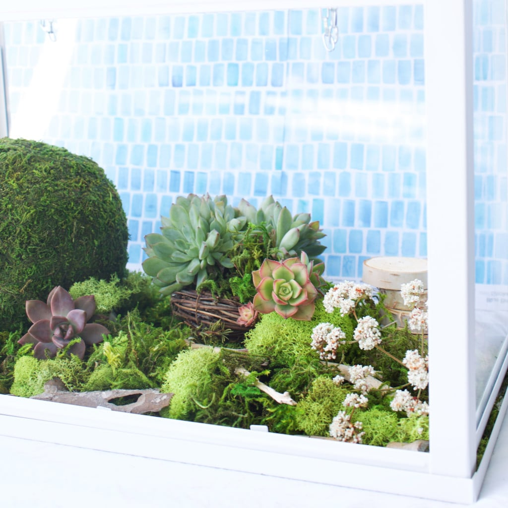 This easy to make terrarium will add a splash of vibrant green to your home and it doesn't require any maintenance to keep up! Anyone can put together this beautiful terrarium, just follow this tutorial!